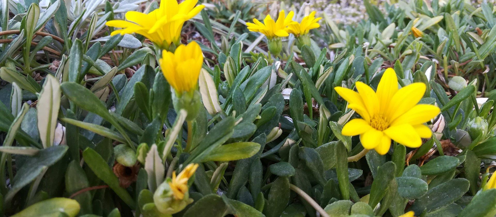 fiori w