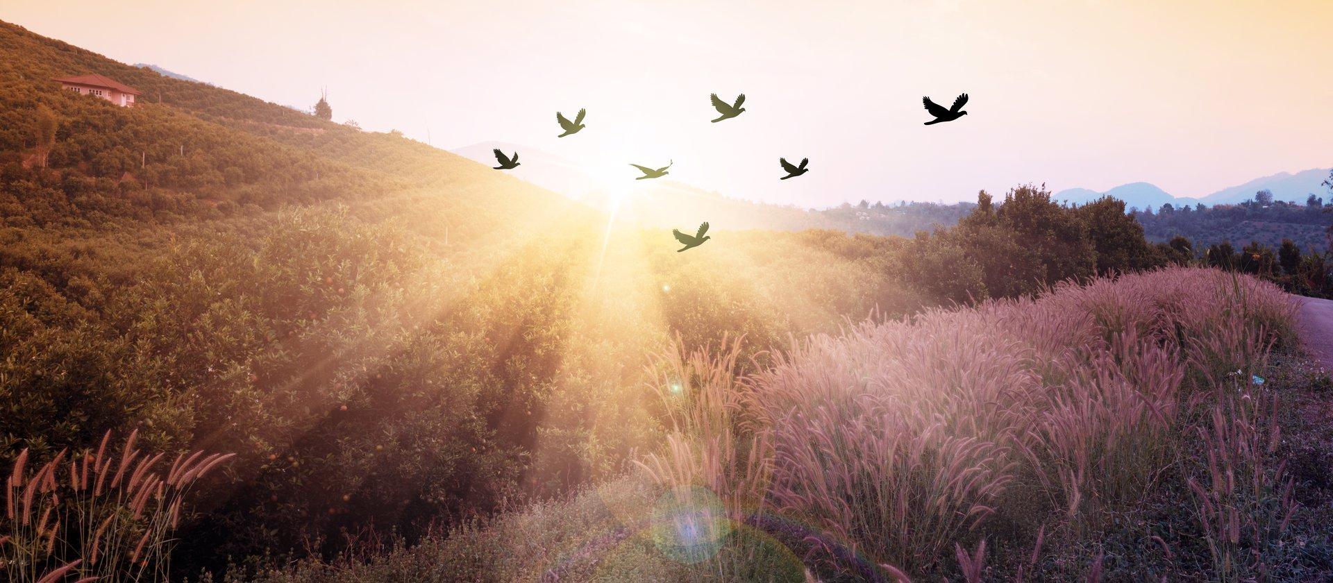 natura alba paesaggio w