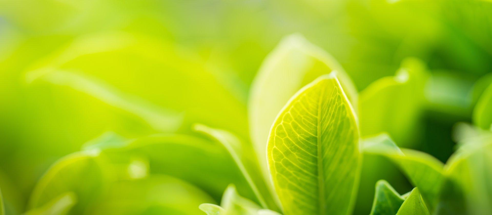 natura foglia verde w